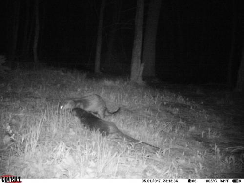 IMAG0010-River Otter