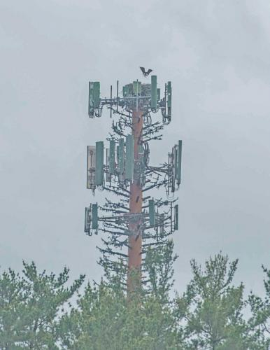 DSC_2682 -Cell Tower